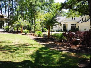 Hilton Head, HHI, Landscaping, Tropcial